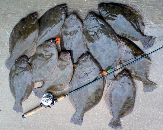 Image gallery texas flounder for Flounder fishing galveston