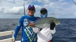 Bluefin Trevally or Omilu in Hawaii